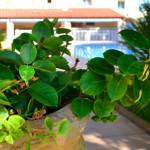 Le jardin de l'hôtel – Hôtel Plage des pins